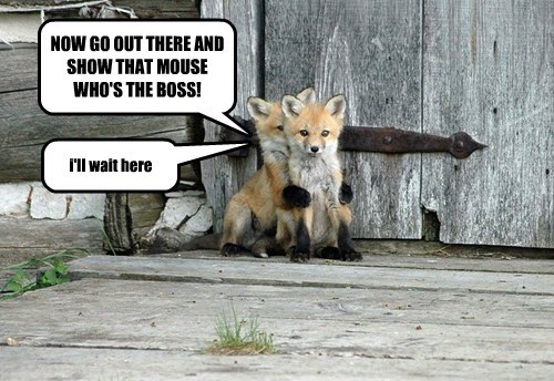 fox captions cute - 8548532224