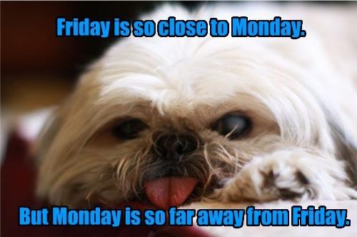 dogs FRIDAY close caption monday far - 8548585984