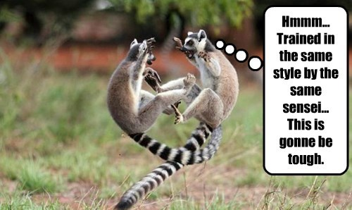 captions,lemur,funny