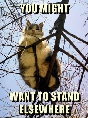 animals cat elsewhere stand caption - 8548889344