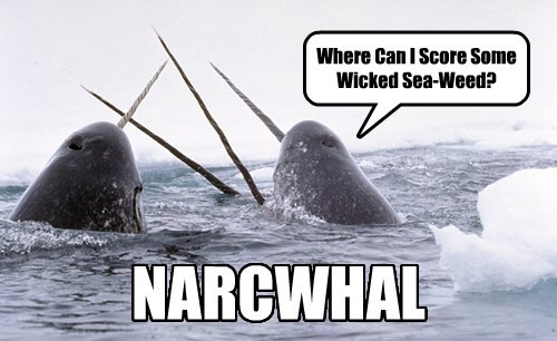 captions puns narwhal funny - 8549006080