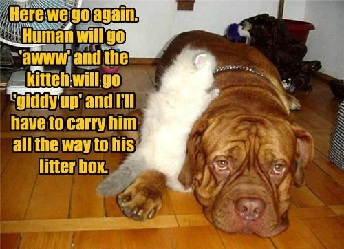 carry kitten litter box caption - 8549113600