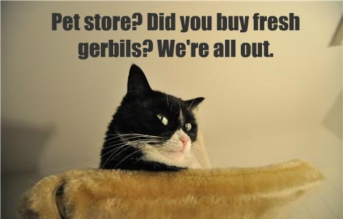 gerbil caption Cats funny - 8549130240
