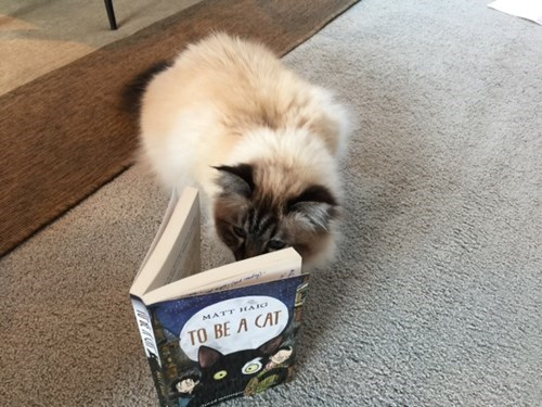 cute cats image This Cat Is Working Through Her Summer Reading List