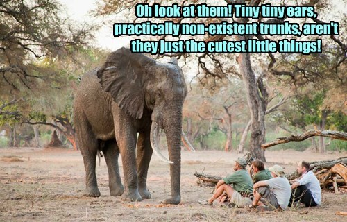 elephant captions funny - 8549277696