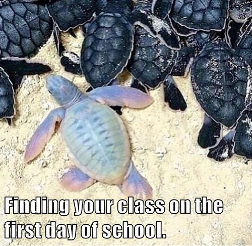 animals captions turtle funny - 8549280512