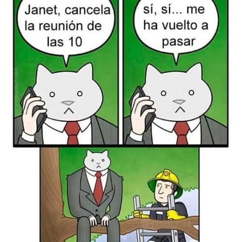 jefe gato