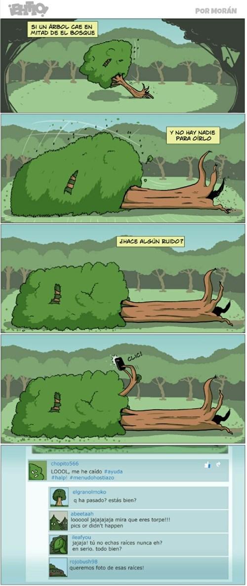 arbol caido