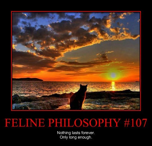 FELINE PHILOSOPHY #107