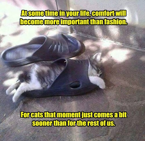 At some time in your life, comfort will become more important than fashion.           For cats that moment just comes a bit sooner than for the rest of us.