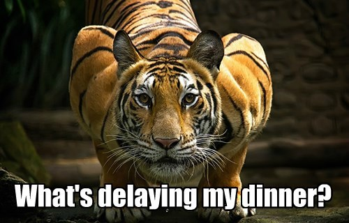What's delaying my dinner?
