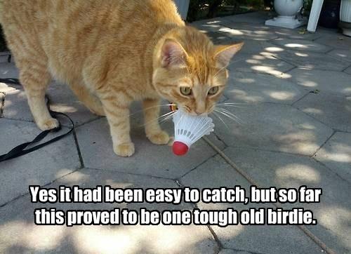 cat catch easy tough bird caption - 8549694208