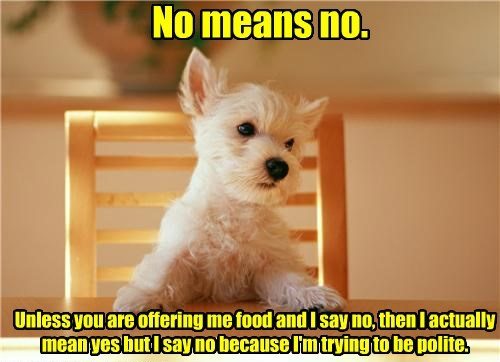 dogs polite no means no food caption - 8549781504