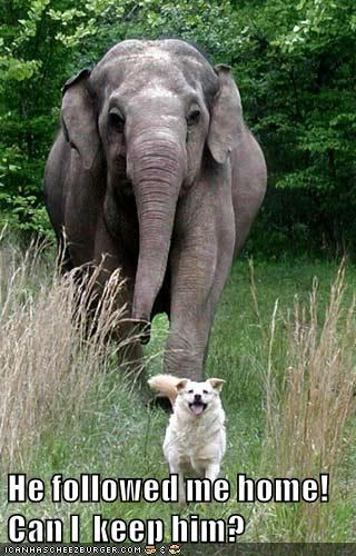 animals dogs elephant captions funny - 8549854208