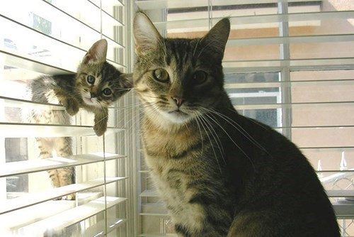 cute cats image What, You've Never Seen a Clone Before?