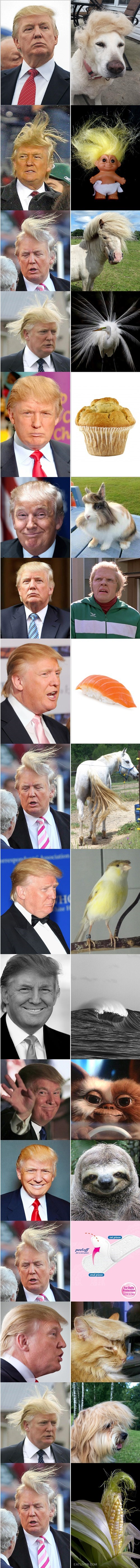 parecidos razonables nivel Trump