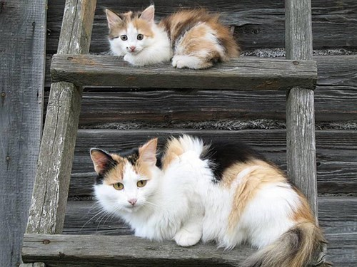 cute cats image Maybe This is Just a Trick of Perspective