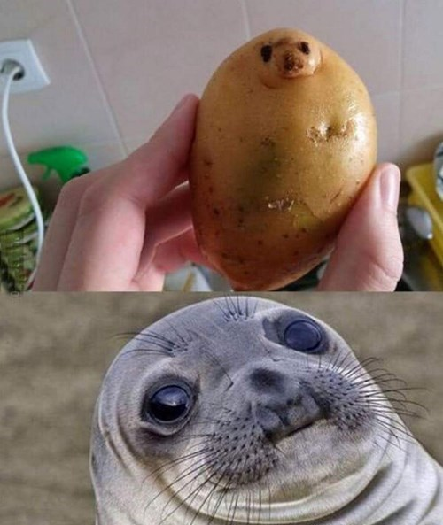 funny memes awkward seal potato