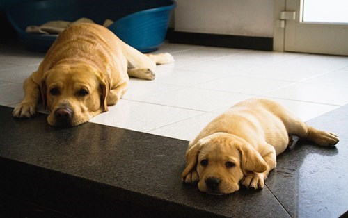 cute dogs image Teamwork Is the Key to Laying Down and Begging for Treats at the Same Time