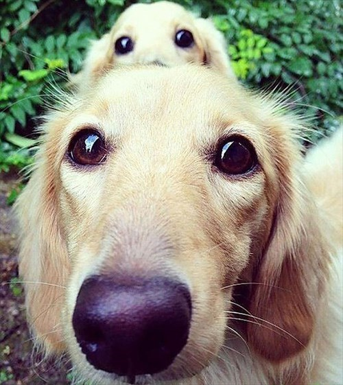 cute dogs image An Extra Set of Eyes Does Come in Handy