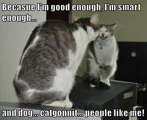animals motivational caption Cats funny - 8550021888