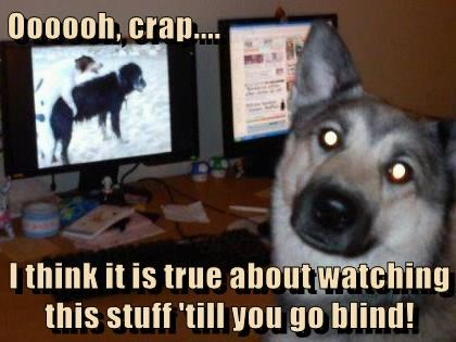 animals dogs pron watch go blind caption - 8550058752