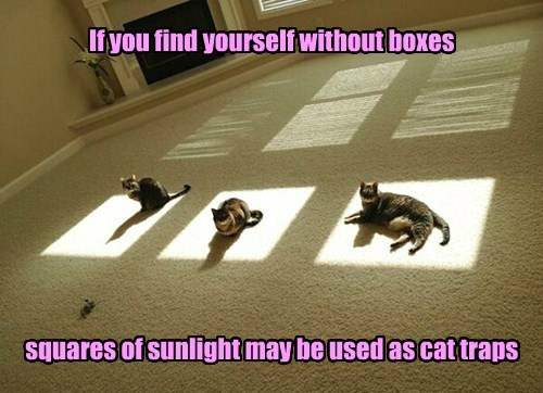But what kind of a cat household has no boxes?