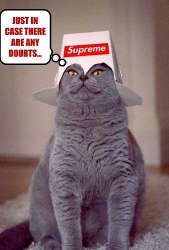 captions Cats funny - 8550514688