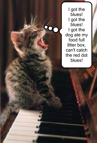 caption Cats funny every day blues - 8550518784