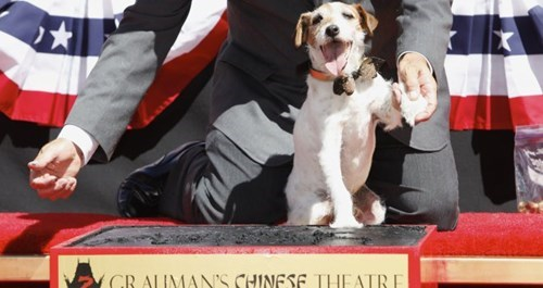 Jack Russell Terrier Uggie from The Artis is dead at 13.