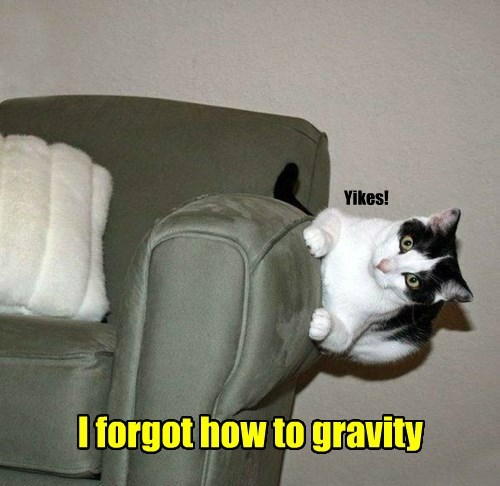 Gravity caption Cats funny