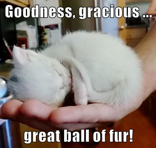 Goodness, gracious ... great ball of fur!