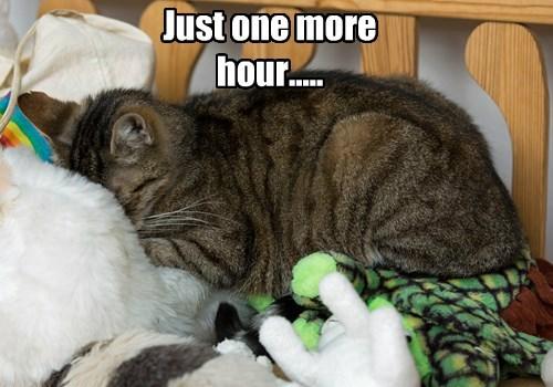 cat nap sleepy captions - 8550965760