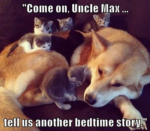 animals dogs kitten bedtime story uncle caption - 8551108864