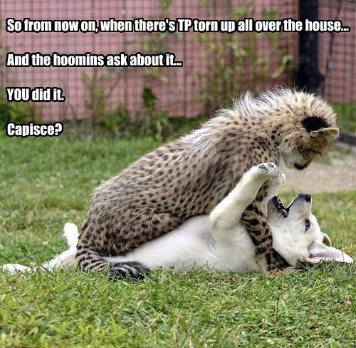 cat dogs capisce toilet paper caption - 8551201536