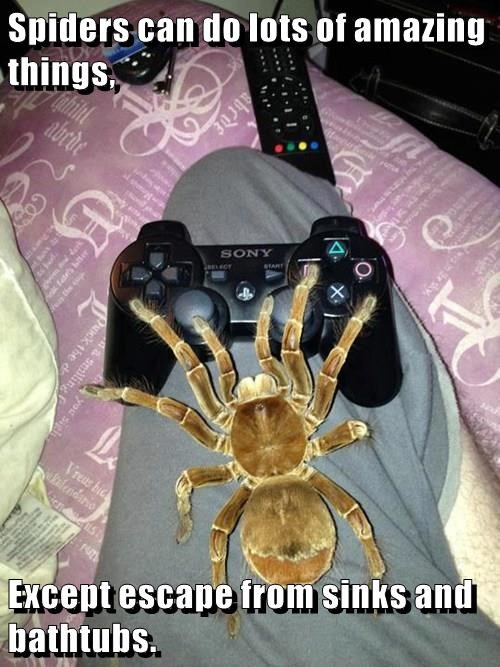scary,spider,video games