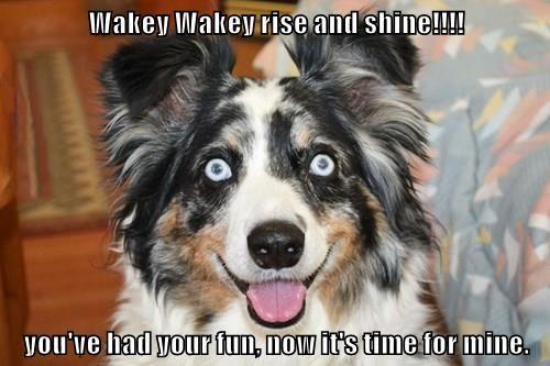 animals fun shine dogs rise caption - 8551301888