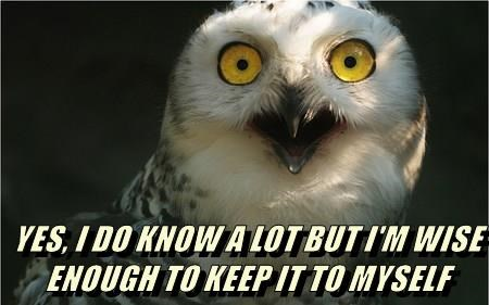 animals captions owls funny - 8551497728