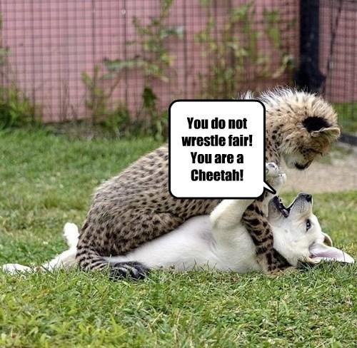 wrestle dogs cheetah cheater caption - 8551550464