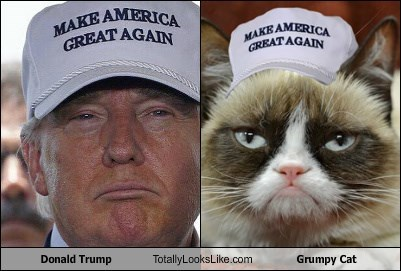 donald trump totally looks like grumpy cat totally looks like
