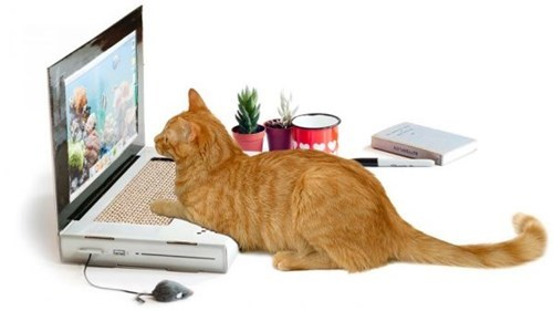 funny cats image What Is This, A Laptop for Cats? ...Oh