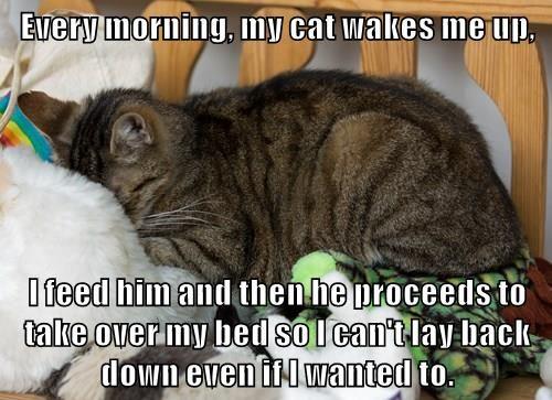 animals captions Cats funny - 8552016384
