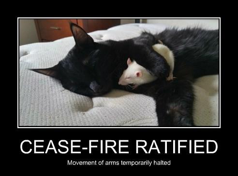 CEASE-FIRE RATIFIED