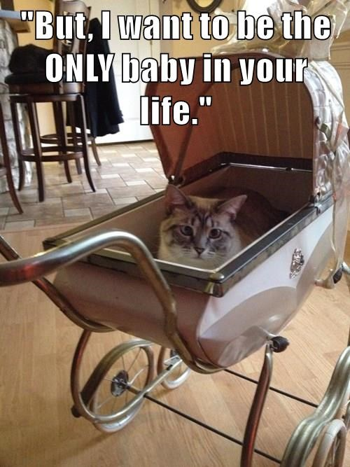 animals cat baby carriage captions - 8552395520