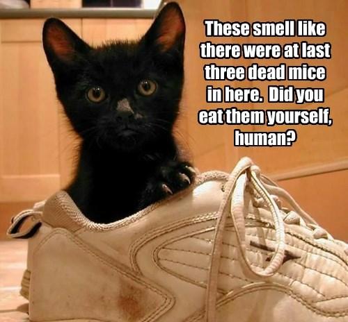 captions Cats funny - 8552414976