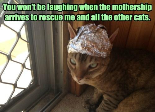 captions Cats funny - 8552422912