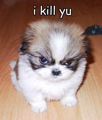 you puppy one day kill caption - 8552501504