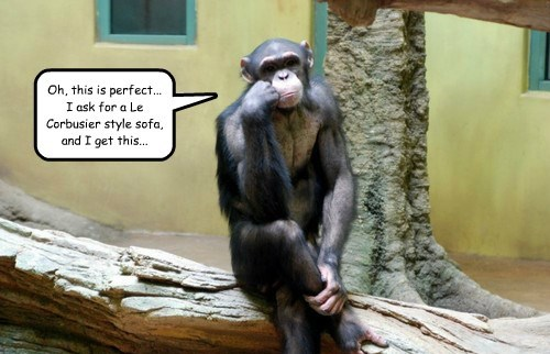 chimpanzee,captions,funny