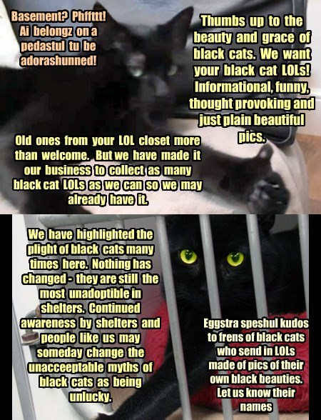 Black Cat Appreciation Day, Monday, 17 Aug 2015!