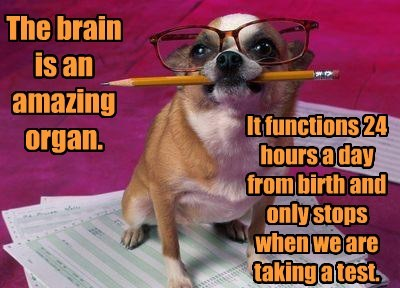 dogs functions test brain stops caption - 8552669184